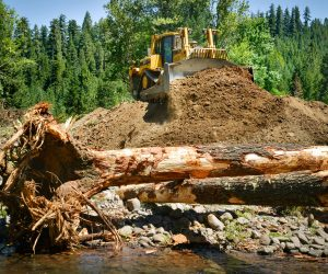 To reconnect Staley Creek to its floodplain, removing berms was essential.