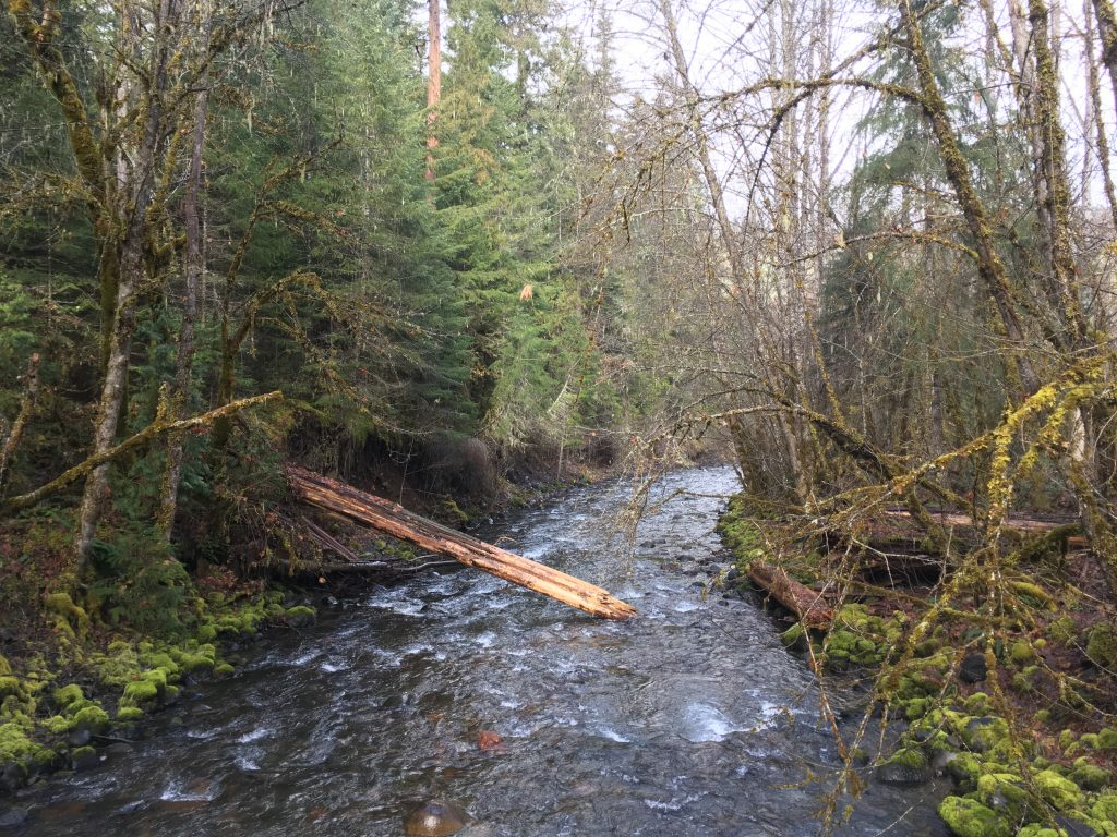 Before the project - Coal Creek was a rushing stream disconnected from its floodplain in a place where it should be slow and spreading out into the floodplain.