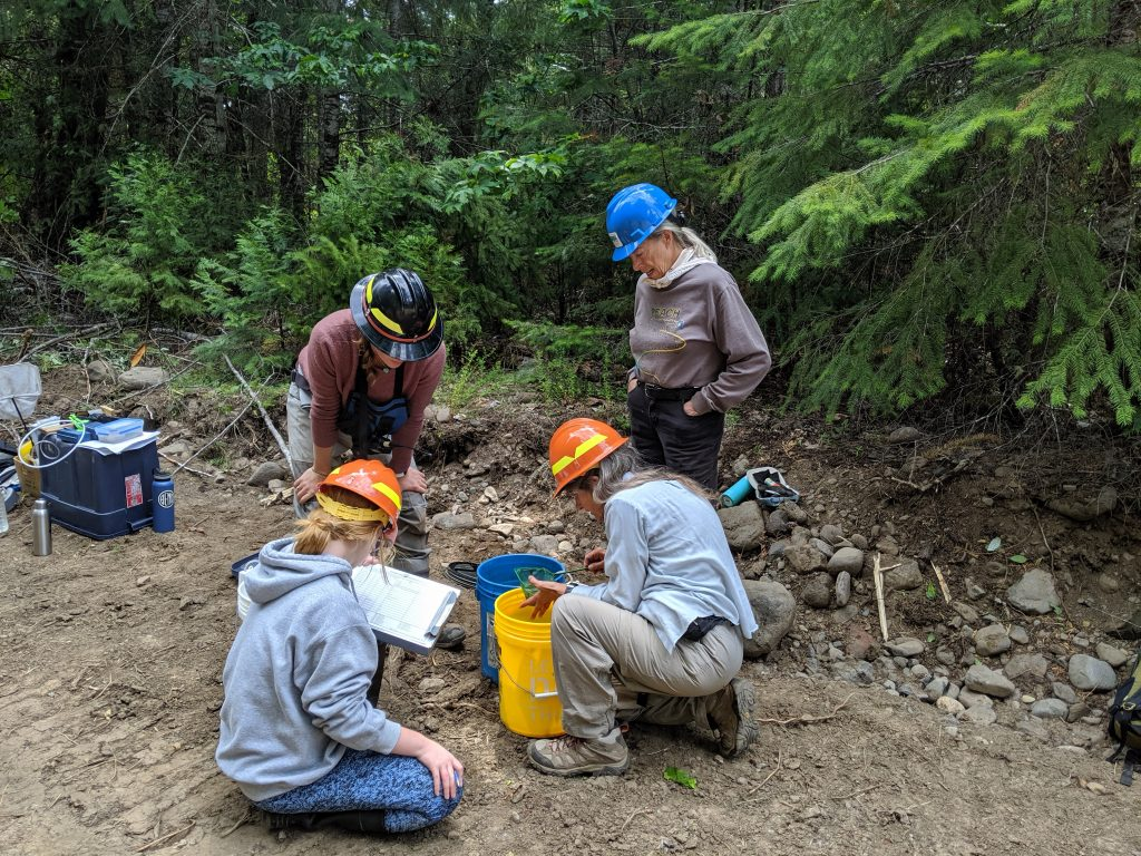 Volunteers helped to ID fish before they were deposited in the Middle Fork Willamette to better asses pre-project conditions.